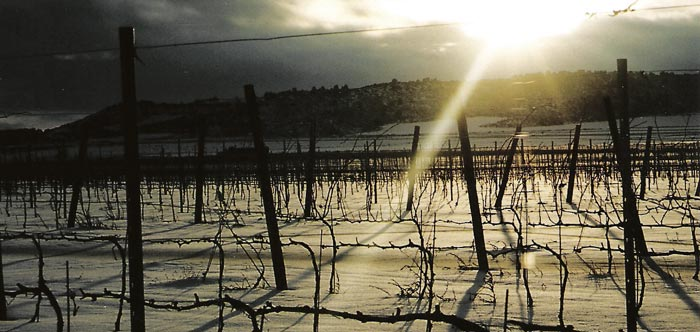 Dos citas imprescindibles para los amantes del vino