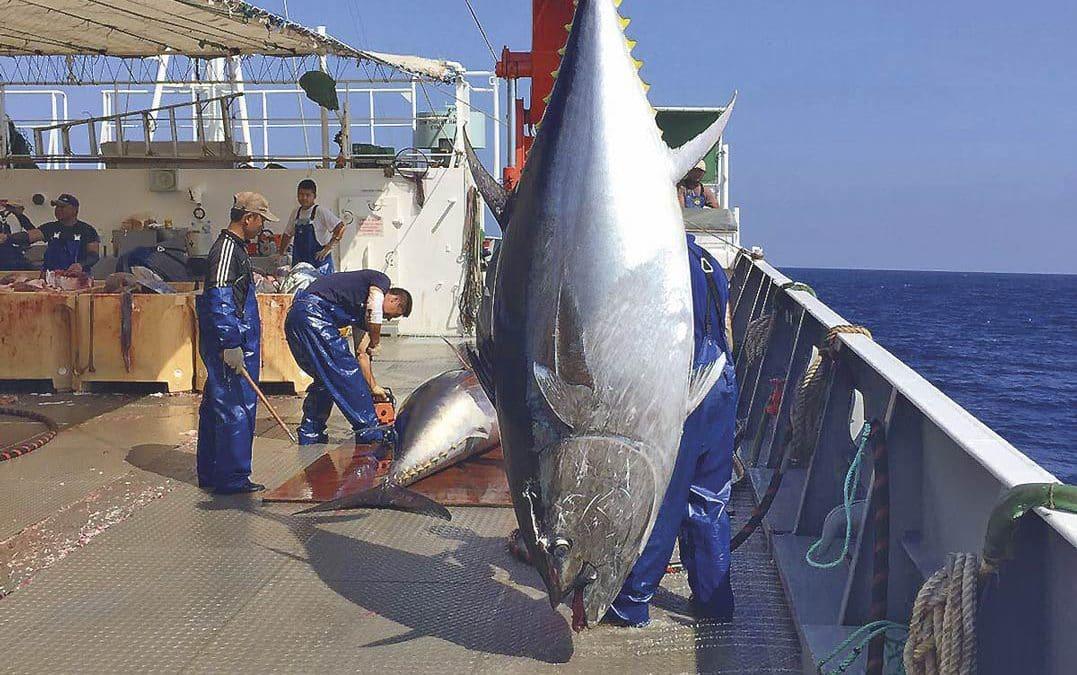 Esta temporada, se lleva el atún