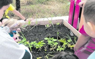 Huertos escolares, una buena herramienta para educar en hábitos de alimentación saludables y sostenibles